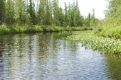 Красивая речка.