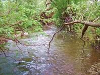 20 река под кустами