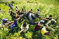 Конго-ДР Конго
