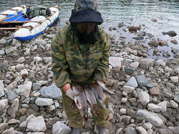 Рыбалка на Витиме. Таймешата и ленок