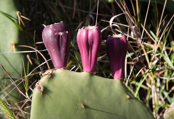 Растения14