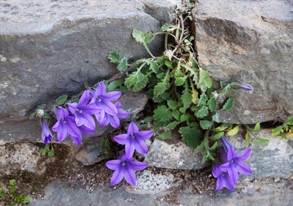 Растения16