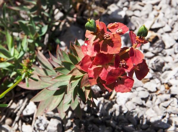Растения22