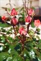 Растения3