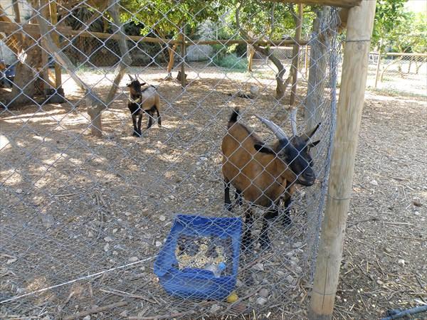 180-Мини-зоопарк