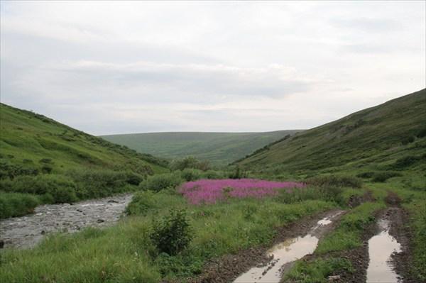 Ручей Понпель-Шор, дорога вдоль него и иван-чай