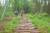 Лесная дорога или дорога из леса.