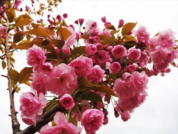 Буйство цветов!