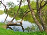 Дерево для купания