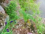 Цветы над обрывом