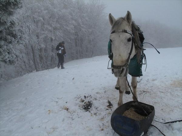 На склоне Улудага. Не ежик  в тумане
