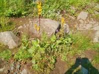 Бывшая узкоколейка с Вижая на Среднюю Усьву. Автор: Дмитрий Голу