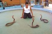 Попытка справиться с тремя кобрами.