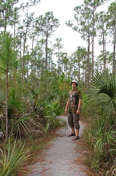 В пальмовом подлеске соснового леса