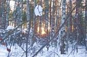 Лес в лучах заката