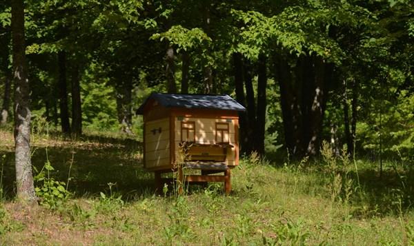 Здесь живут пчелы