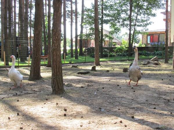 Зоопарк в НВН