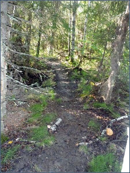 Загадочные сильно пробитые тропы в лесу 2