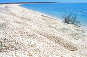 Пляж ракушек Шелл-бич