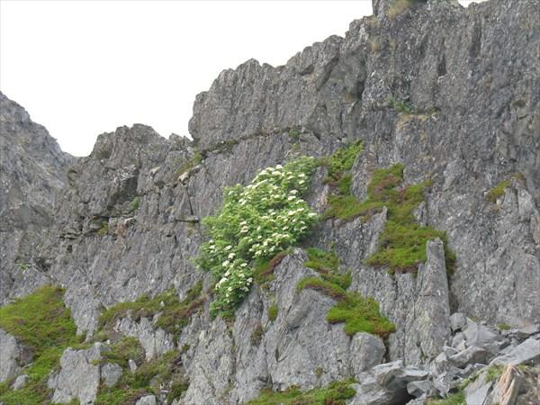 Рябина на скалах