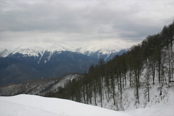 лес на склоне