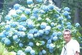 Кусты красивых цветов повсюду