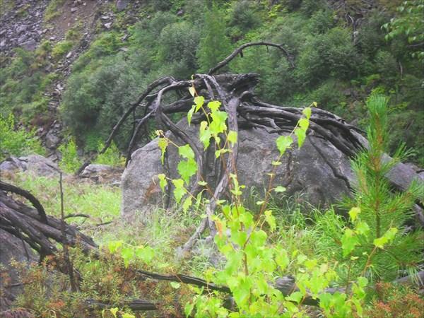Спуск с гольца к ручью Иркут