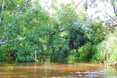377 Деревья падают в речку