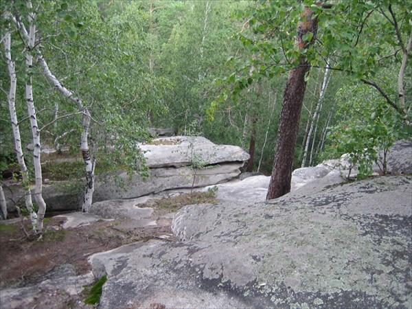 И на скалах растут деревья