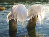 Водяные грибы...Оз.Тургояк