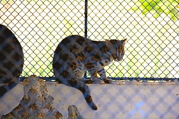 030-Зоопарк