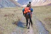 На лошади лучше, чем пешком.