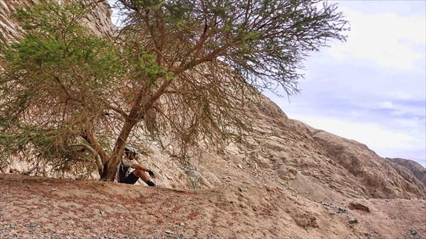 Подъём в гору Синай