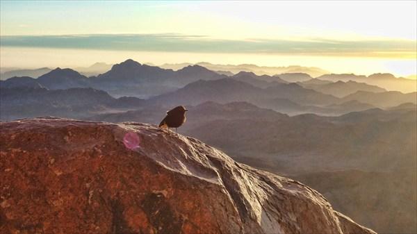 Птица высоко в горах