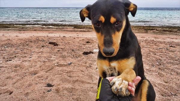 Невероятно умная собака