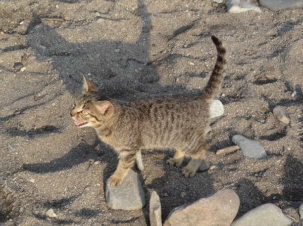 Котенька в Рудной пристани