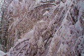 ещё раз выпал снег