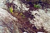 07 весна
