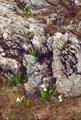 08 цветы