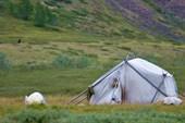 Палатка оленеводов в верховьях Оганьи