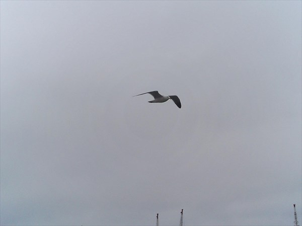 053-Чайка