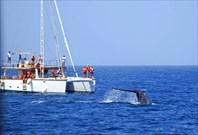 Мирисса. Whale watching.