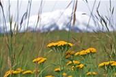 травы и Гора