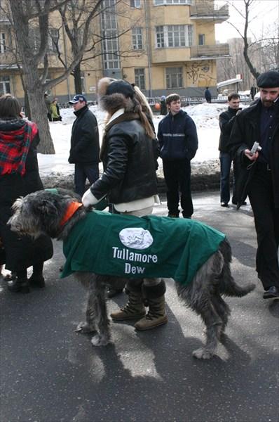 ирландская собака