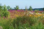 Власьевские цветы
