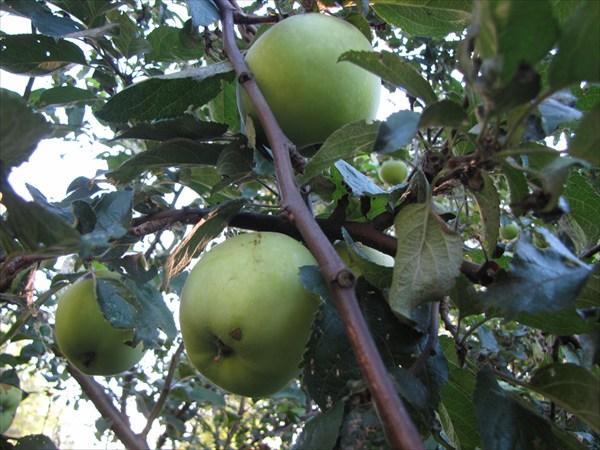 Съешь моего яблочка