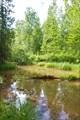 Таёжное озерцо. Вода по всему пути такая в основном.