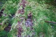 Трак, оставшийся от прохождения 2001 года. Старые гати.