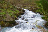 река Тростенец