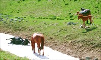 лошади едят снег